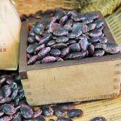 【新物】紫花豆 5合(約550g) 北海道 平成29年産 新豆