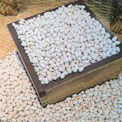 大手亡(手亡豆) 5合(約750g) 北海道  令和元年産