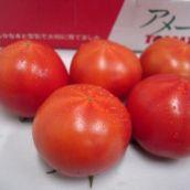 【長野県産・他】高糖度トマト「アメーラ」1ケース