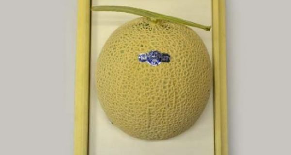 【静岡県産】マスクメロン(小)1個・【カリフォルニア産】ピュアスペクトネーブル5個 - 画像2