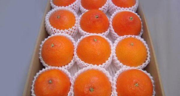 【長崎県産】オレンジ「紅香」 - 画像1