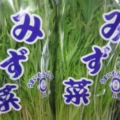 【茨城県産・他】水菜