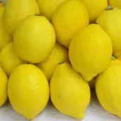 【アメリカ産・他】レモン