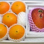 【宮崎県産】マンゴー「太陽のたまご」4L 1個・ピュアスペクトネーブル 5個