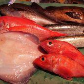 旬の鮮魚セット