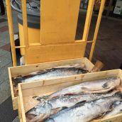 北海道日高ブランド 新巻鮭「銀聖」3.2kg