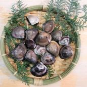 地蛤(はまぐり・ハマグリ) S 産地(三重) 1kg