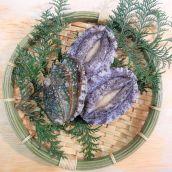 蝦夷鮑(蝦夷あわび・蝦夷アワビ) (養殖) 産地(韓国) 1個 貝の販売