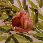 セコガニ(香箱ガニ) 甲羅盛 1個 ※ズワイガニ雌蟹