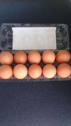 【卵】じょっぱり 赤玉1パック10個入 - 画像2