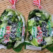 ワサビ野沢菜 150g