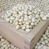 【新豆・令和2年産】【300g】 北海道中山農園産 白小豆(ホッカイシロショウズ)